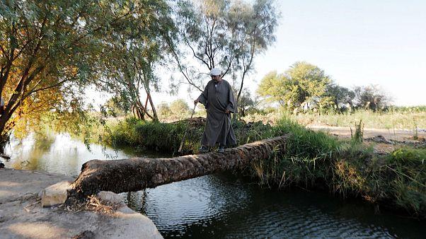 مزارع يسير في مزرعته بالقرب من قناة تصب في نهر النيل جنوب الأقصر، مصر، 27 أكتوبر 2019