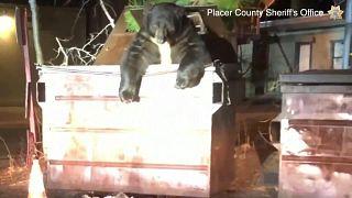Polizeibekannter Bär aus Müllcontainer gerettet