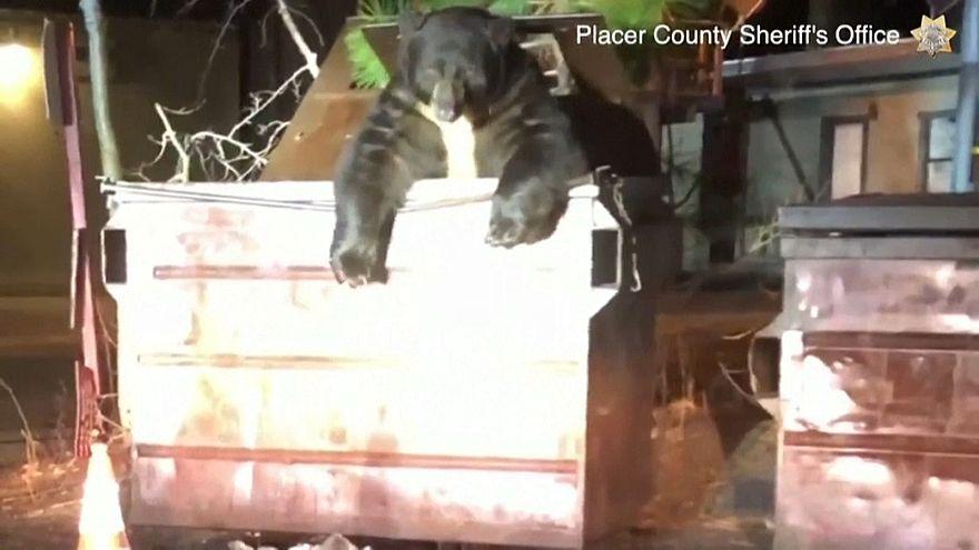 گرفتار شدن خرس کنجکاو در سطل زباله در کالیفرنیای آمریکا