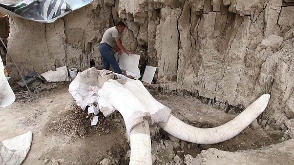 México desentierra secretos milenarios sobre la caza de los mamuts