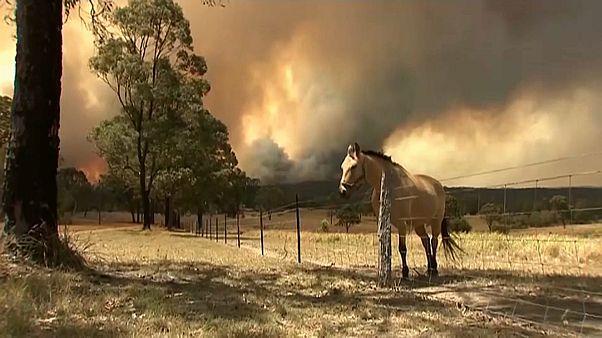 شاهد: عشرات الحرائق تلتهم غابات أستراليا بسبب الجفاف والرياح القوية