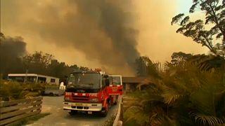Australia: circondati dal fuoco, uomini e animali cercano scampo