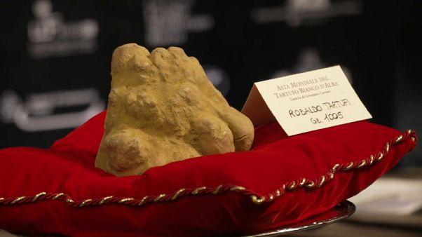 Asta del tartufo bianco d'Alba: prezzi-record per la ventesima edizione
