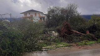 Πεσμένο δέντρο από την κακοκαιρία στα Ιωάννινα (αρχείο)