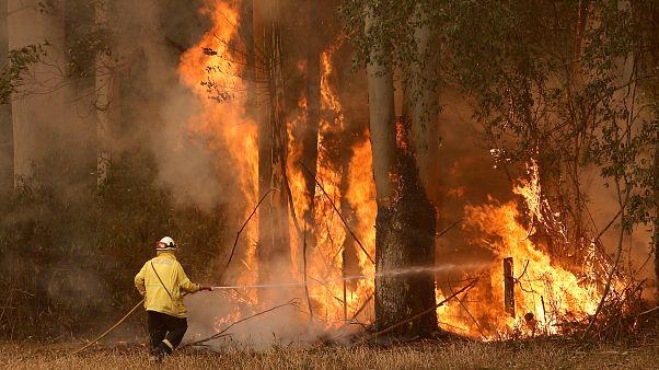 Avustralya'da orman yangınlarının bilançosu artıyor: 3 kişi ve en az 350 koala öldü