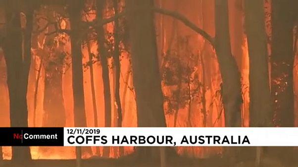 Egyhetes szükségállapot a tüzek miatt Új-Dél-Walesben