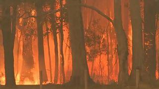 Les incendies en Australie s'intensifient et se rapprochent de Syndey