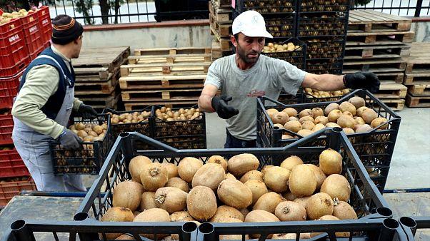 Türkiye'de en çok gençler işsiz, işi olanların da geliri düşük