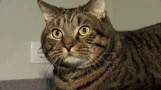 Flugsicherheit: 10 Kilo Katze sind 2 zuviel