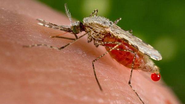 سازمان جهانی بهداشت: با پرتونگاری هستهای، پشهها را عقیم کنیم