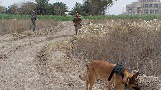 """شاهد: منح ميداليات """"الشجاعة"""" لحيوانات جازفت بحياتها في الحروب"""