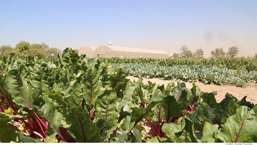 تعرف على مستقبل الزراعة في دبي   Euronews