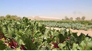 A jövő garanciája: ellenálló szupernövények és a csoda termés