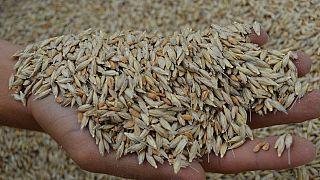Türkiye'de buğday üretimi, tüketimi ne kadar karşılıyor?