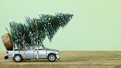 There are lots of different options available when you choose your Christmas tree this year