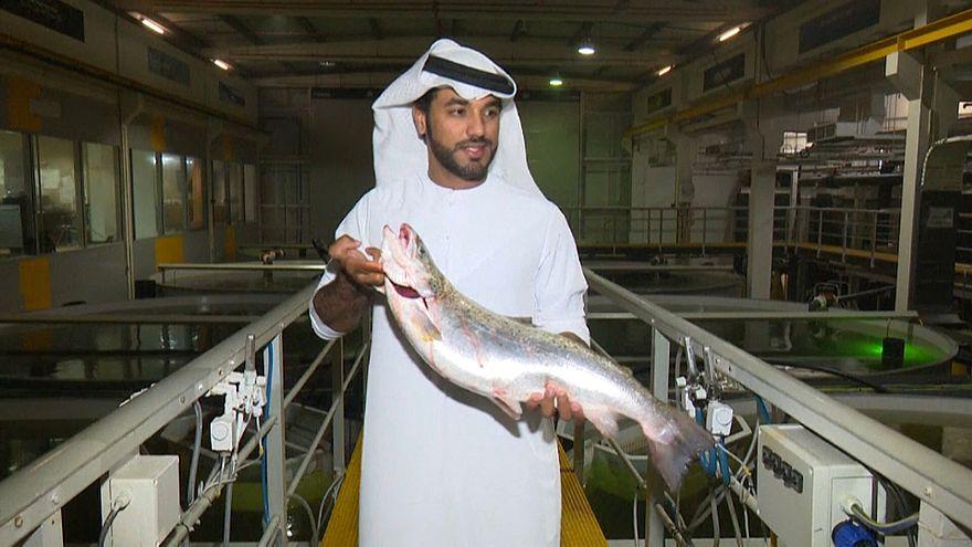 شاهد: مزارع لسمك السلمون في صحراء دبي