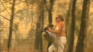 شاهد: أسترالية تخاطر بحياتها لإنقاذ كوالا من النيران المشتعلة