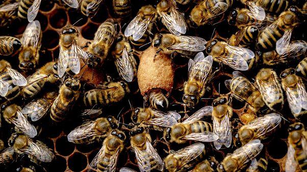 Válságban az európai méhészet