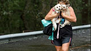 Fransa'da köpeklerin saldırısına uğrayan hamile kadın yaşamını yitirdi