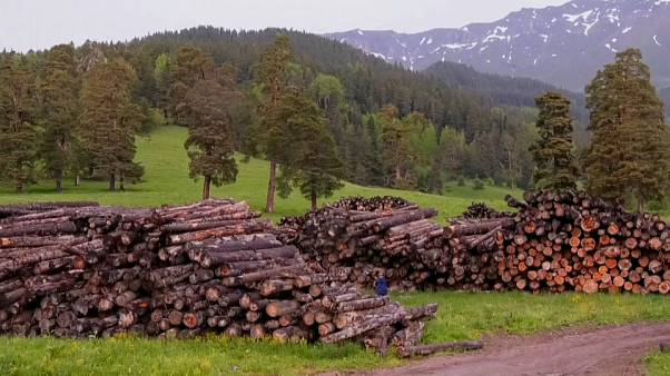 Impotencia ante la devastadora deforestación del Cáucaso ruso