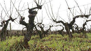 Le Beaujolais nouveau et le marché à l'export
