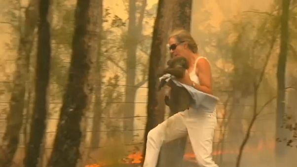 Incêndios florestais colocam Austrália sob alerta