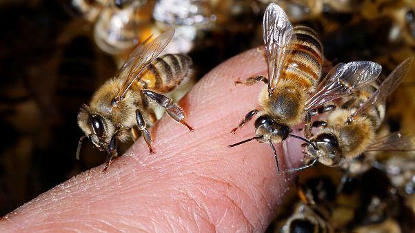 Salvar a las abejas, el objetivo de la recién creada Asociación Europea de la Abeja