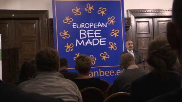 Abelhas já têm uma associação europeia para se defenderem