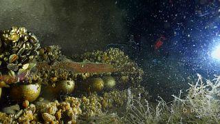 Des obus découverts dans le lac Léman