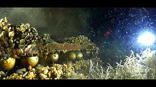 Umweltschützer schlagen Alarm: Tonnenweise Munition im Genfer See