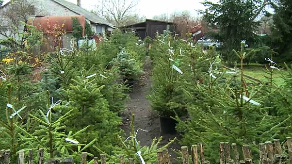 Lituania alquila árboles de Navidad para frenar la tala