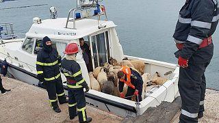 سفينة شحن  تجنح قبالة رومانيا والسلطات تعمل لإنقاذ 14 ألف رأس غنم