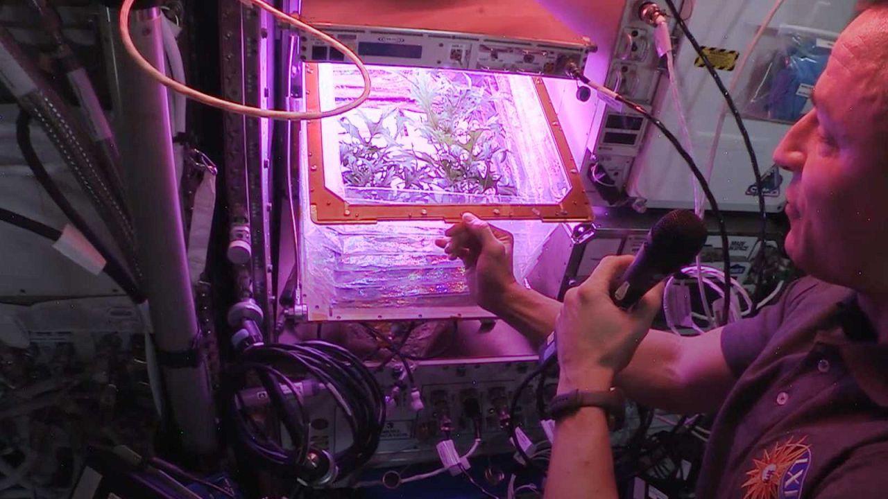 Quelles plantes comestibles poussent le mieux à bord de l'ISS?