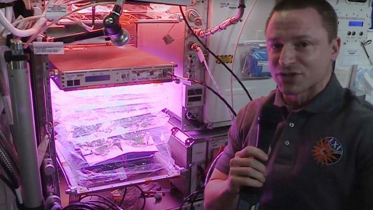 Спроси нашего астронавта | Какие съедобные растения выращивают в космосе?