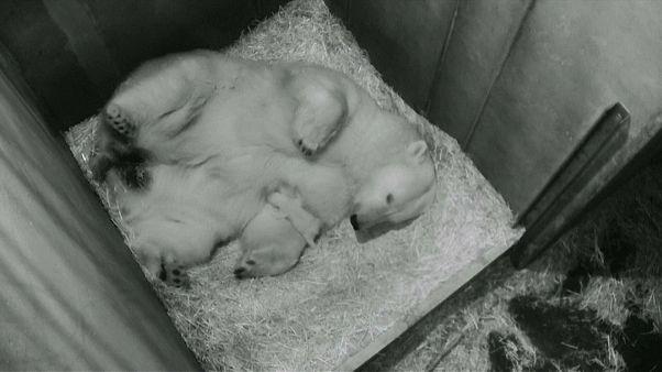 Шёнбруннский зоопарк представил нового обитателя