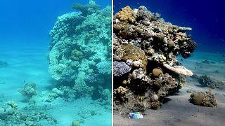 Sea-thru algoritması ile renkleri düzeltilmiş bir su altı fotoğrafı