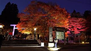 Forests bathed in shades of red are an enchanting autumn destination for visitors to Japan