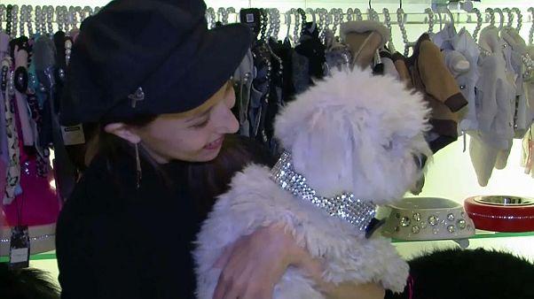 Hunde in Cashmere und Bling zu Weihnachten