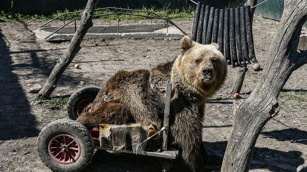 Θεσσαλονίκη: Πέθανε ο Ούσκο, το ανάπηρο αρκουδάκι