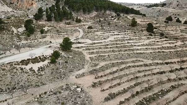 Spanish farmers work with private enterprise to combat desertification
