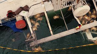 Romanya, alabora olan Queen Hind kargo gemisi