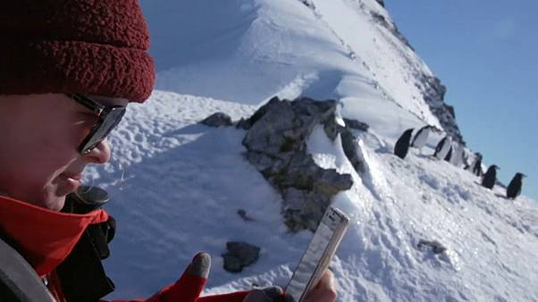 "Antarktis-Pinguine: ""Trinkt Euren Champagner zuhause!"""
