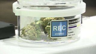 مبيعات بمئات آلاف الدولارات في اليوم الأول من افتتاح متاجر الماريجوانا في ميتشيغن