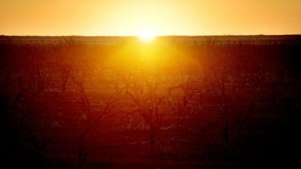 سازمان ملل متحد: گرمای دهه ۲۰۱۹-۲۰۱۰ استثنایی بود