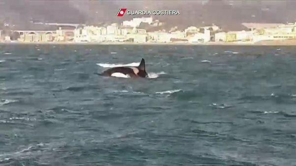 Orche al largo di Genova