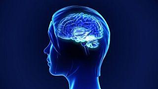 Doğum kontrol hapı alan kadınların beynindeki hipotalamus bölümü küçülüyor