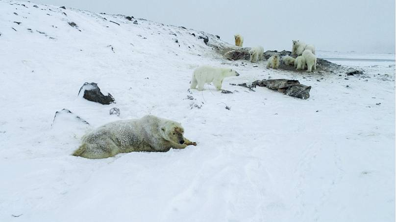 Ryrkaypiy: Far-north Russian village overrun by polar bears