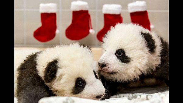 Alles Gute zum Nikolaus, Panda-Zwillinge!