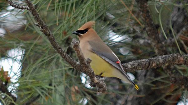 تغییرات اقلیمی باعث «کوچک شدن» پرندگان شده است