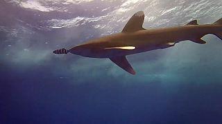 Aggasztó az óceánok oxigénszintje